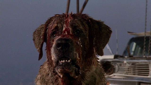 Stephen Kings Cujo
