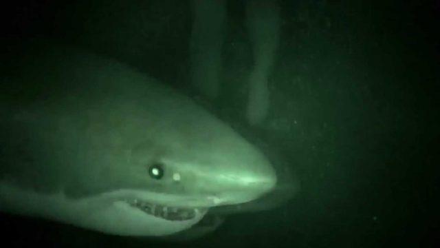 """Haie im abgefahrenen Found Footage Horror """"Cage Dive"""", hier ist der Trailer"""